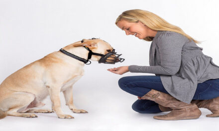Dog Training Tips For Fear Biting
