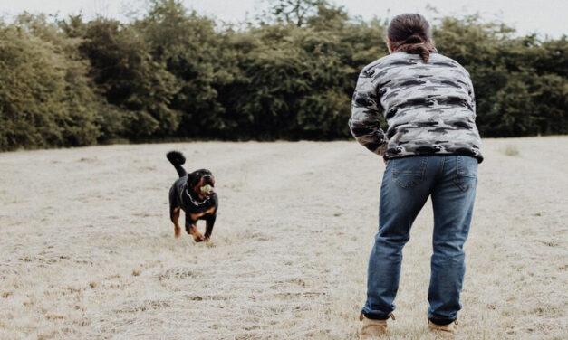 Dog Training Guides – Top Program Reveals Dog Training Secrets!