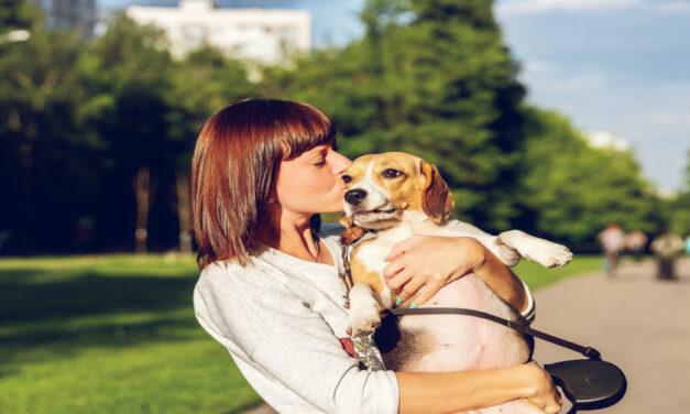 Positive Dog Training with Healthy Dog Training Treats